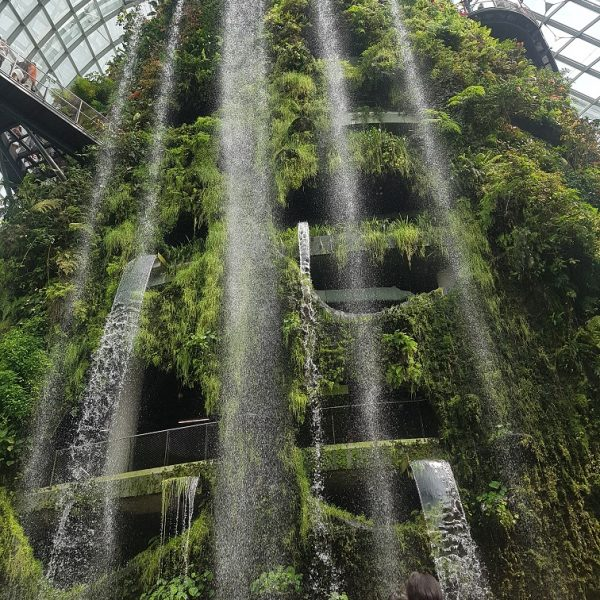 Cloud Forest - World's largest indoor waterfall